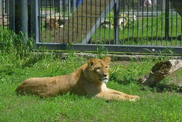 Воронежский зоопарк бесплатно примет гостей  18мая